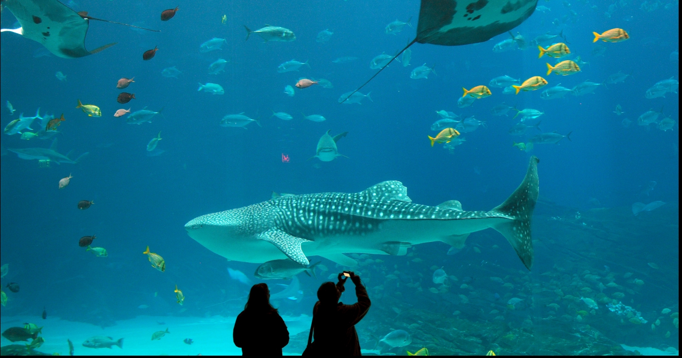 Check out the Georgia Aquarium, one of the largest in the United States.