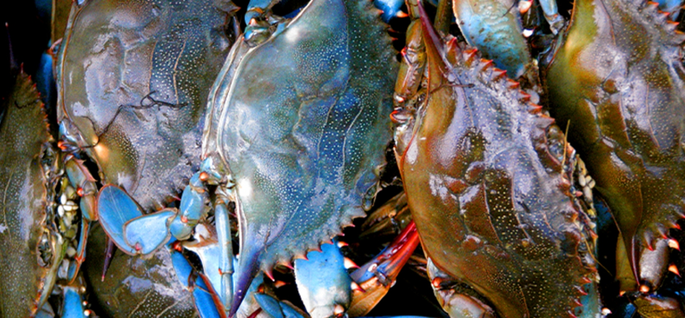 Enjoy some blue crab in Baton Rouge!