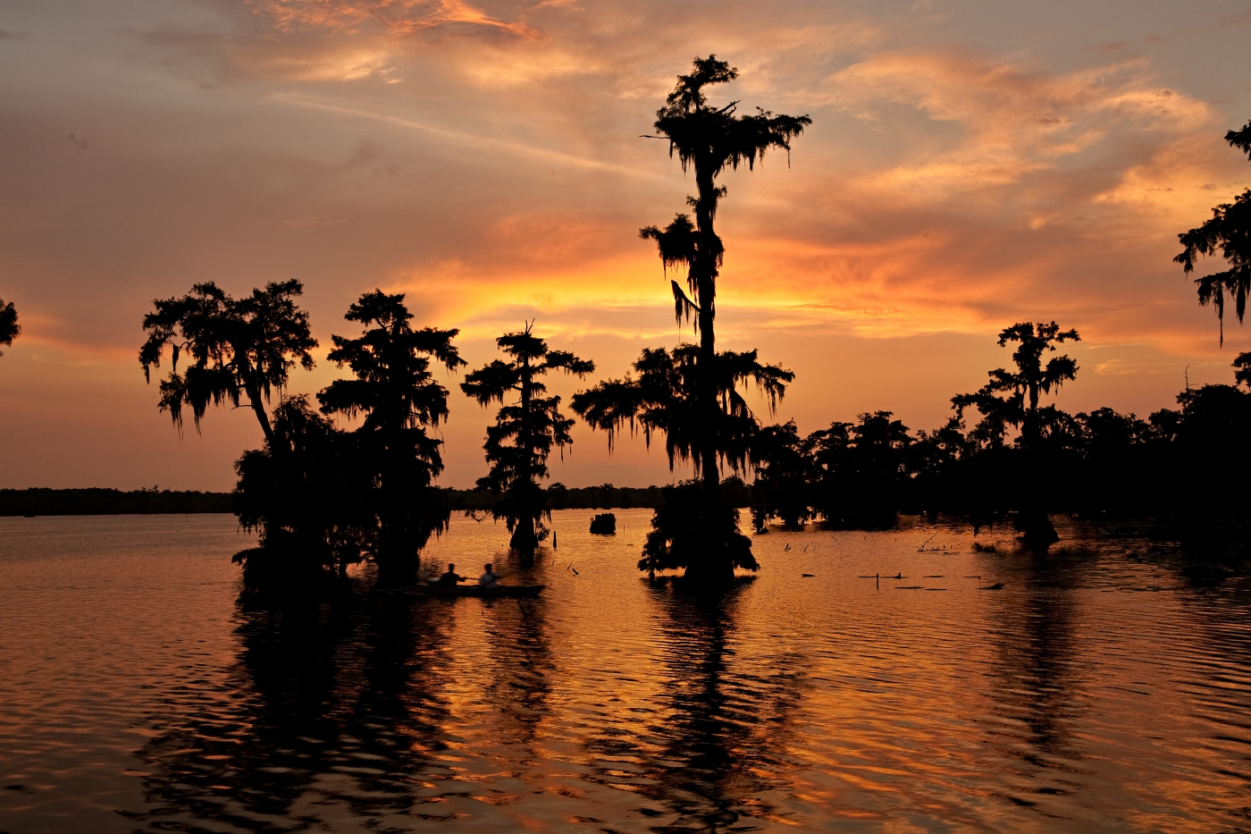 You'll see beautiful wildlife and sunsets in Louisiana.