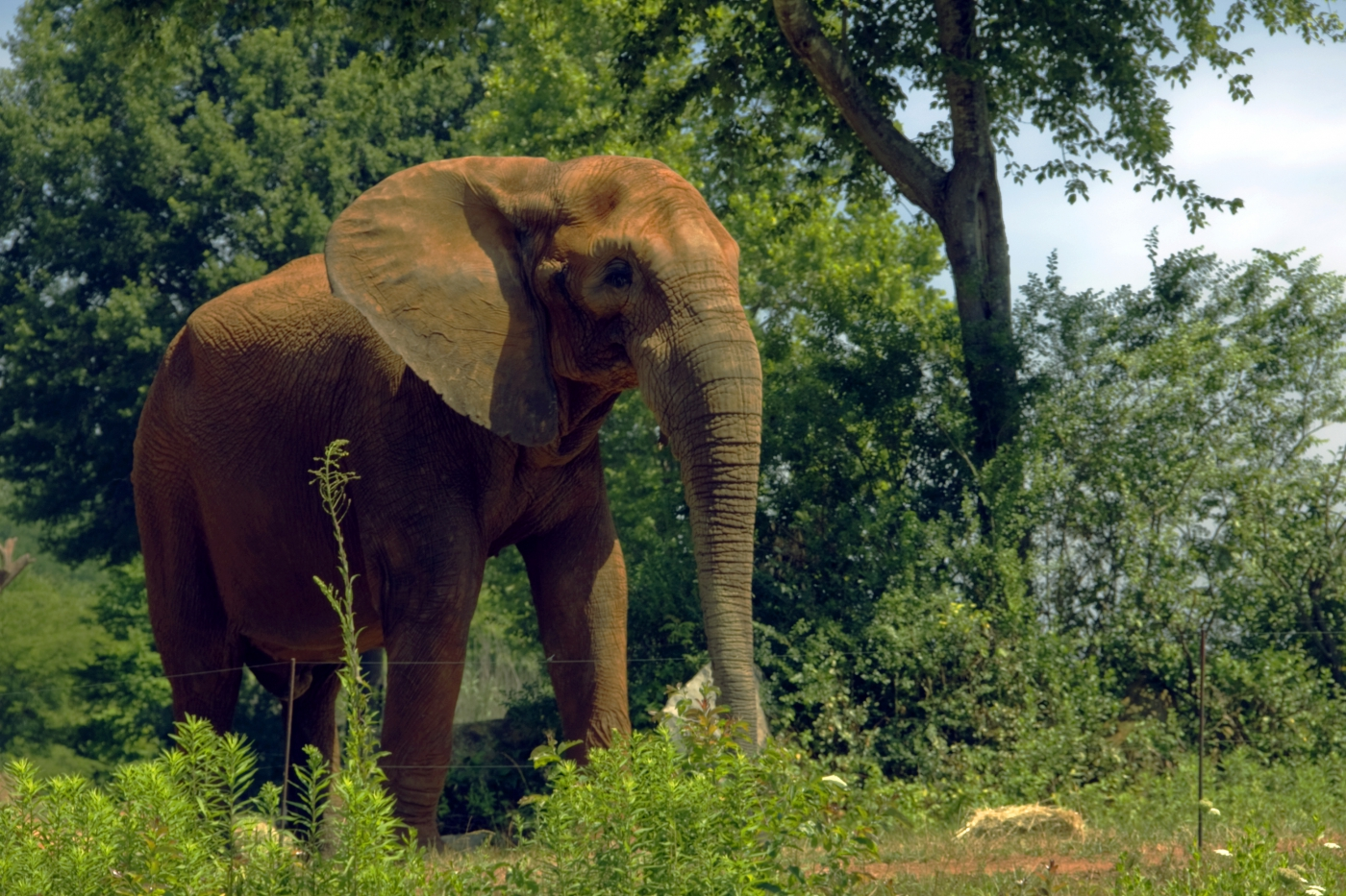 The North Carolina Zoo in Asheboro is a great destination for the day!