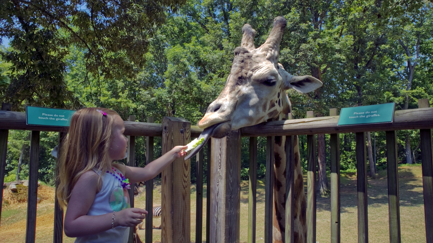 The North Carolina Zoo is in Asheboro and is sure to keep the kids (and adults) entertained!