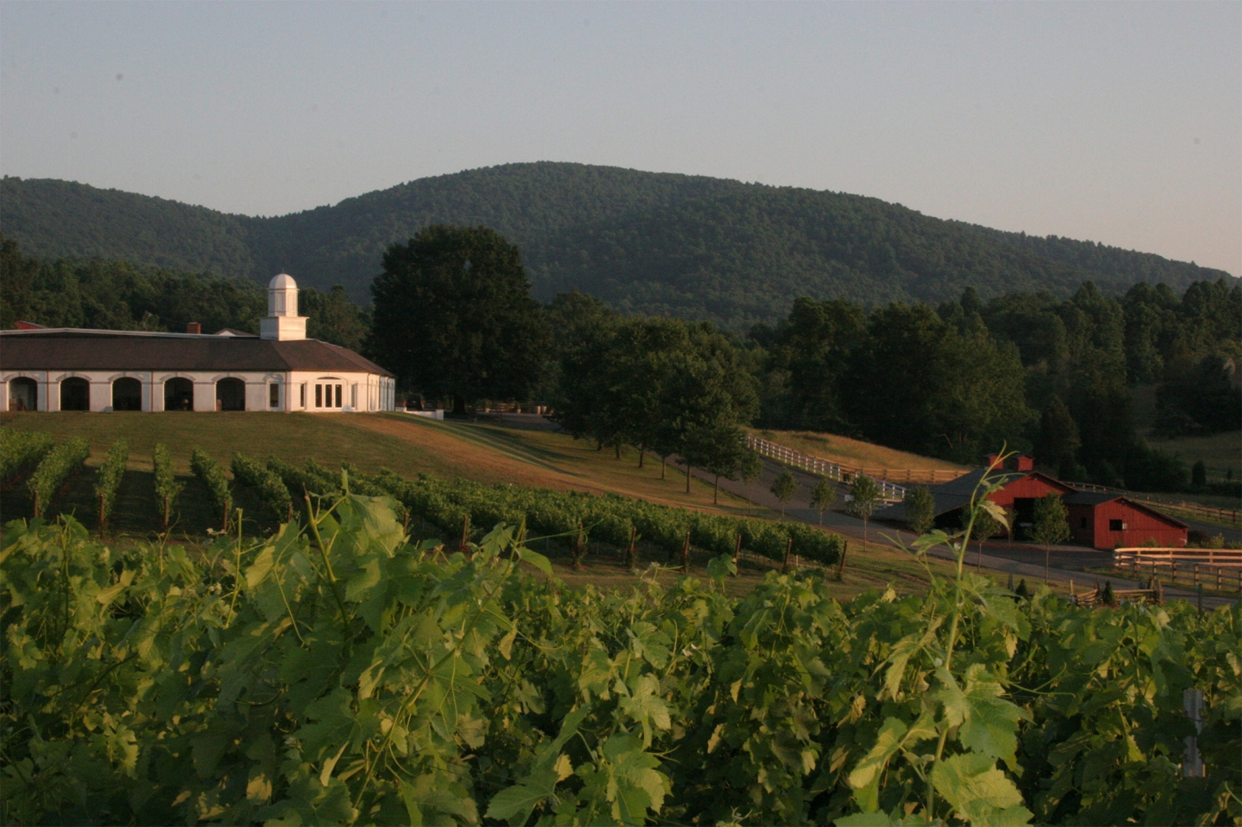 Wine in Virginia. Photo Courtesy of Barboursville Vineyards.