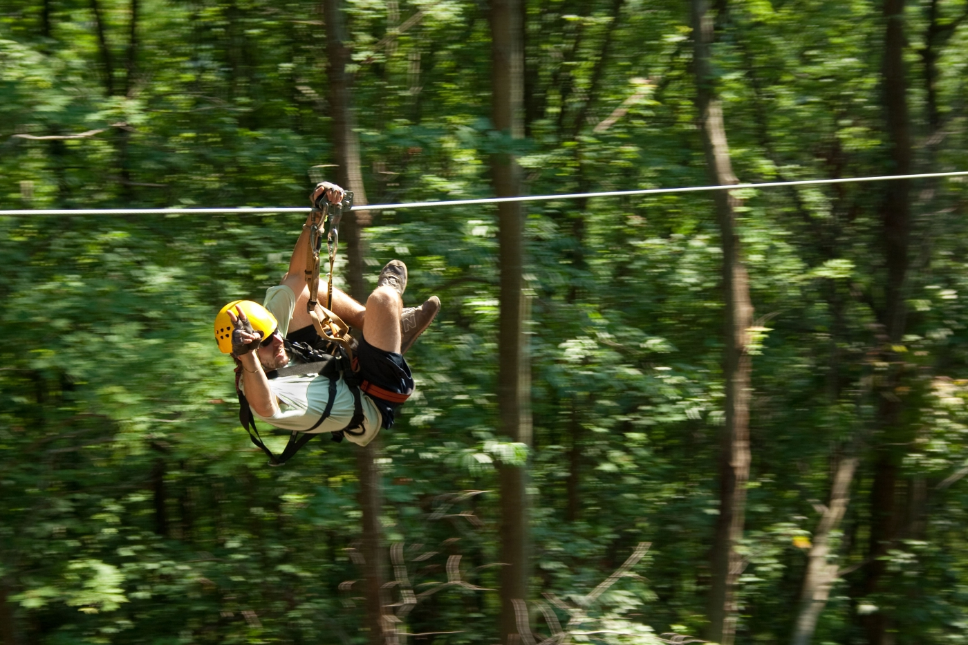 Zip through the tree tops!