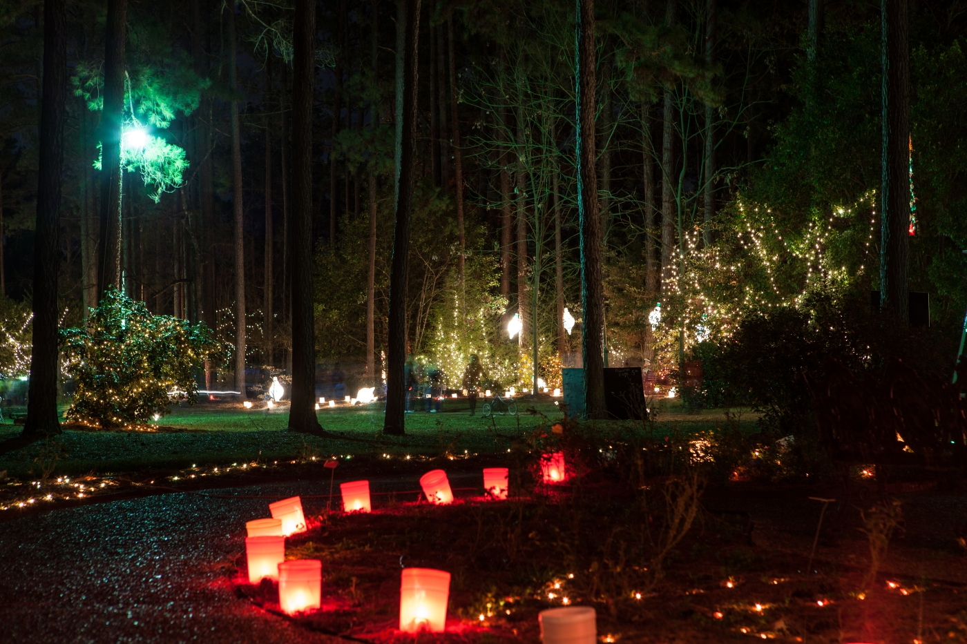 Each Winter, the gardens of the American Rose Society are decorated with thousands of twinkling Christmas lights during an event called Christmas in Roseland.