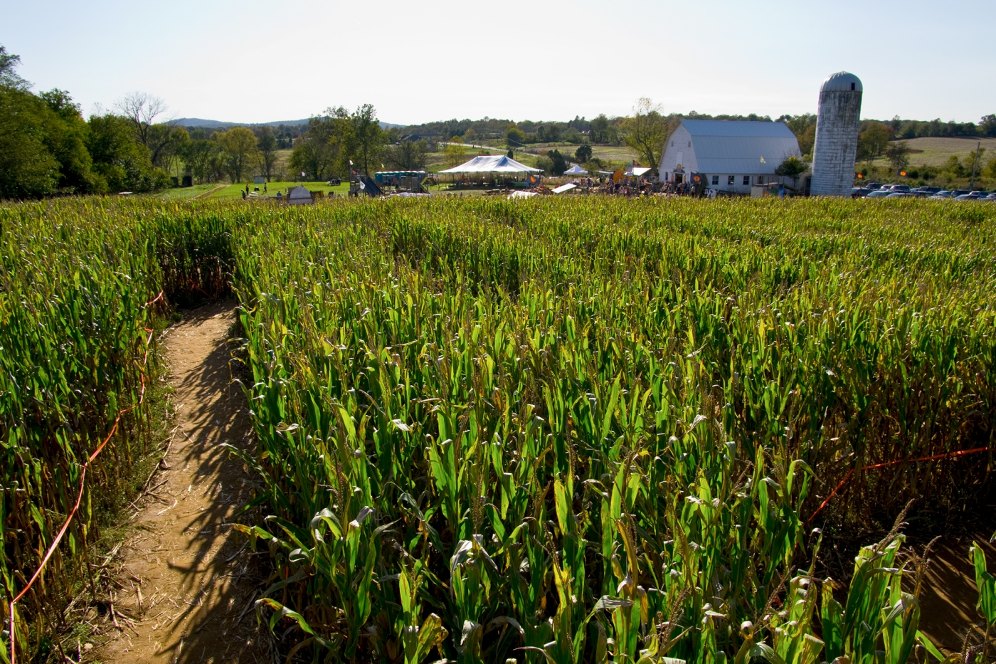 The Corn Maze In The Plains. Photo: ©Virginia Tourism Corporation