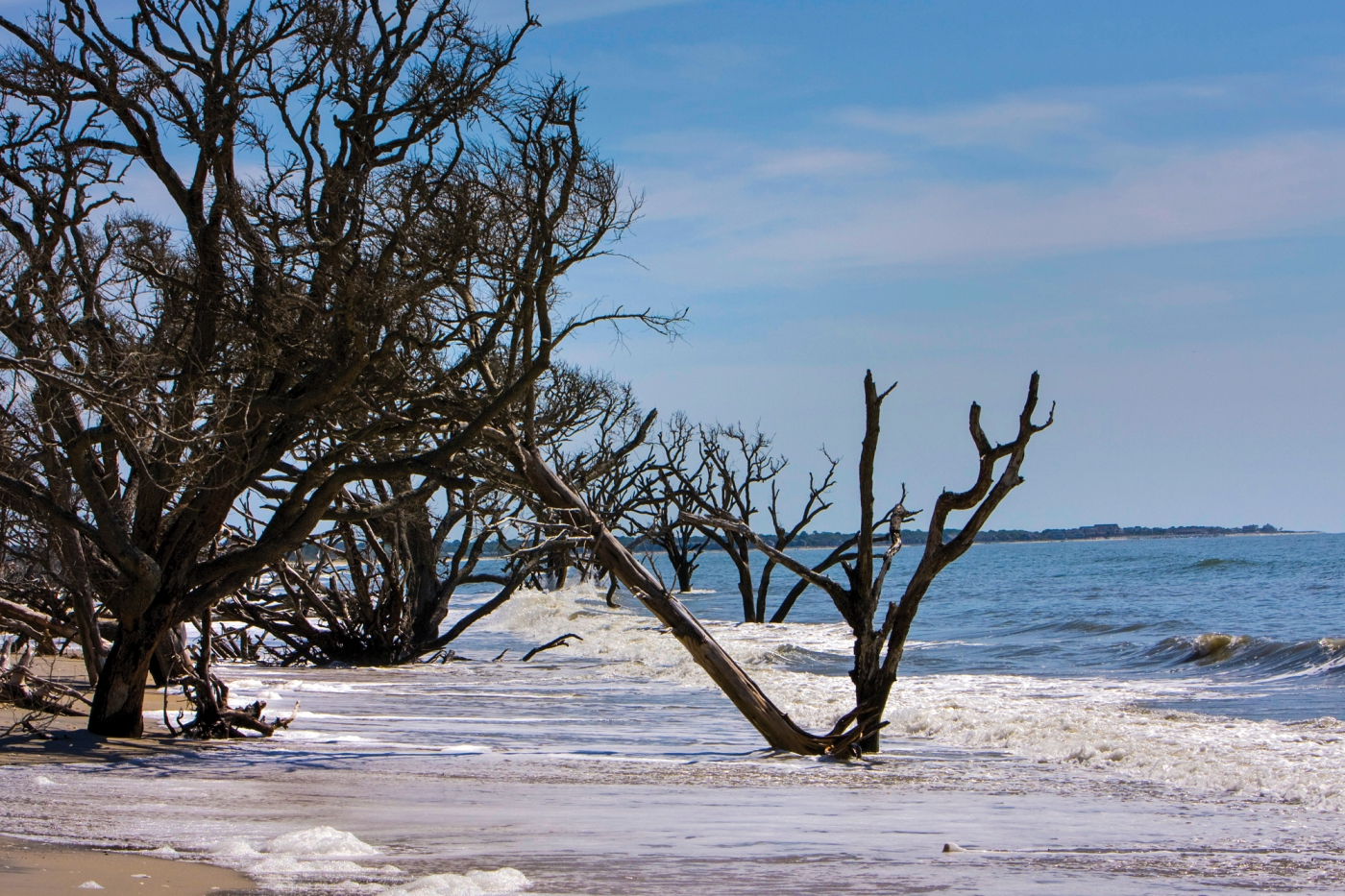 Take in the unique surroundings of Botany Bay on Edisto Island, South Carolina.